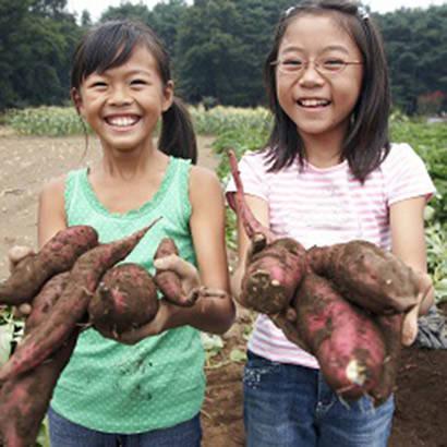 Three Gardens Serving Three Populations 410
