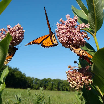 pollinator solarization blog 410