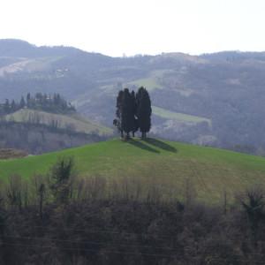 Fondazione-Augusta-Pini/gallerie/pievedelpino02