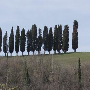 Fondazione-Augusta-Pini/gallerie/pievedelpino03