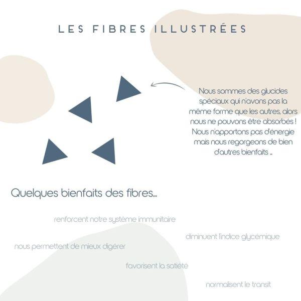 Les fibres illustrées