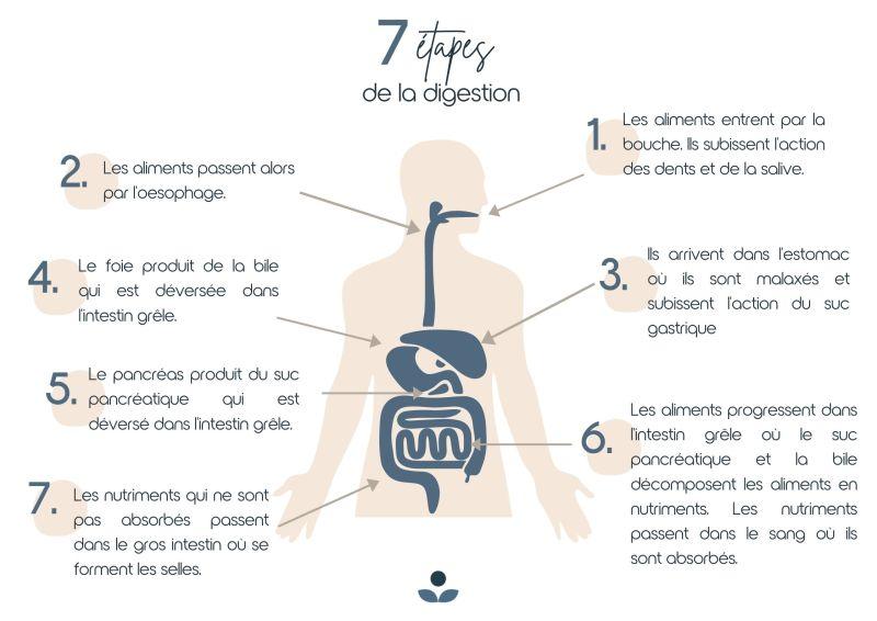 Schéma 7 étapes d'une bonne digestion