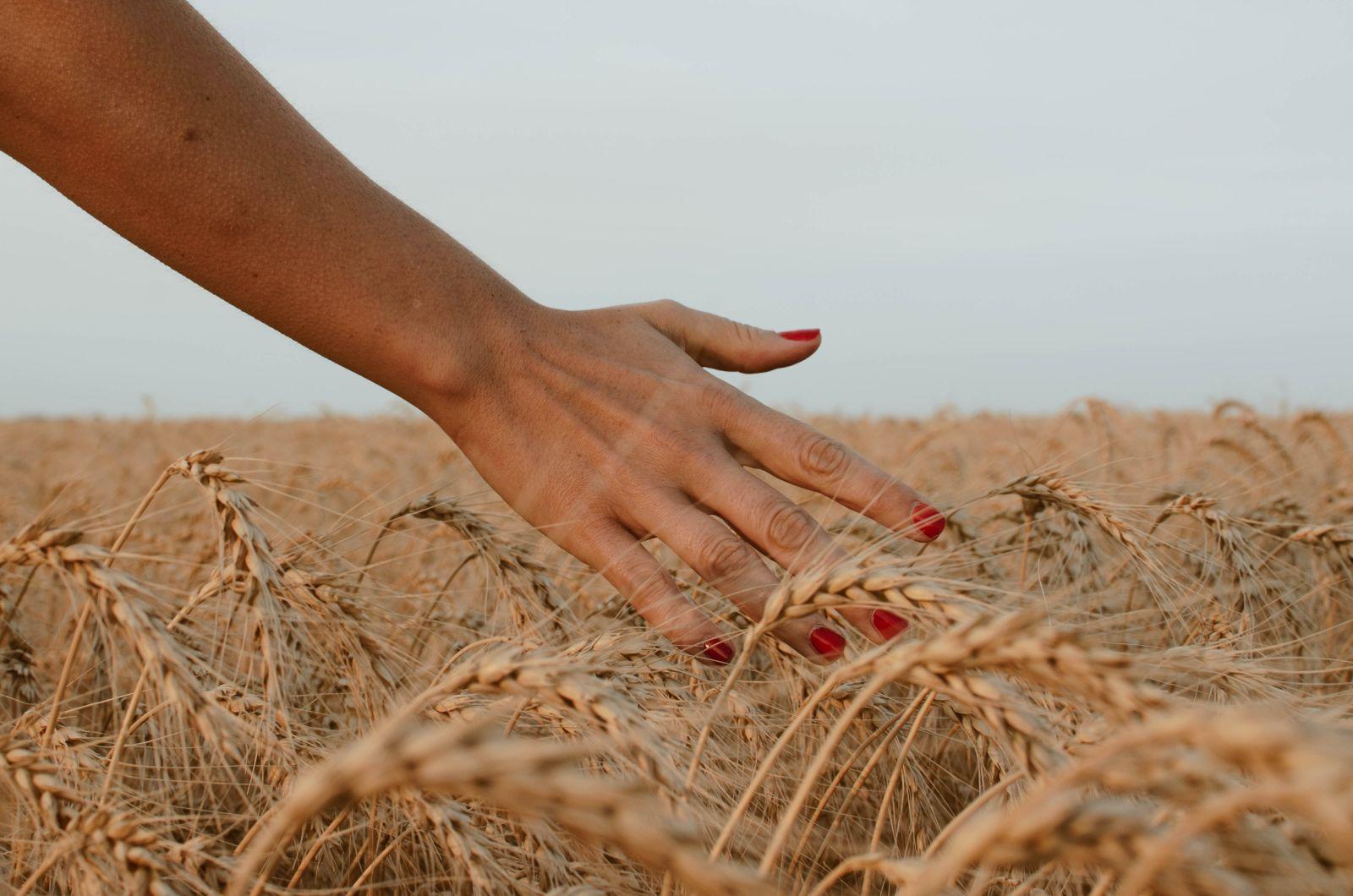 Main dans un champ de blé