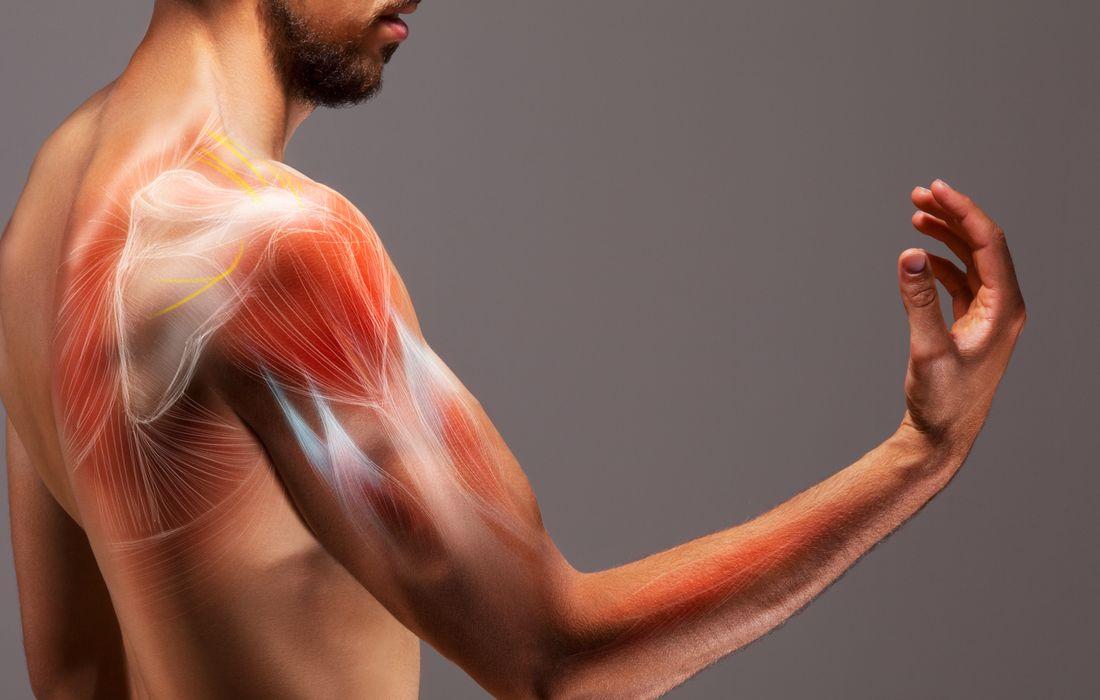 muscles in body