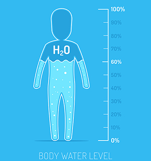 illustration of water in the human body