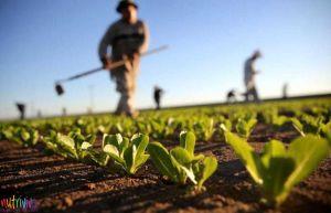 Agricoltori in Italia agricoltura biologica Agricoltura biologica, quella italiana è la più green d'Europa agricoltura biologica 1 300x193