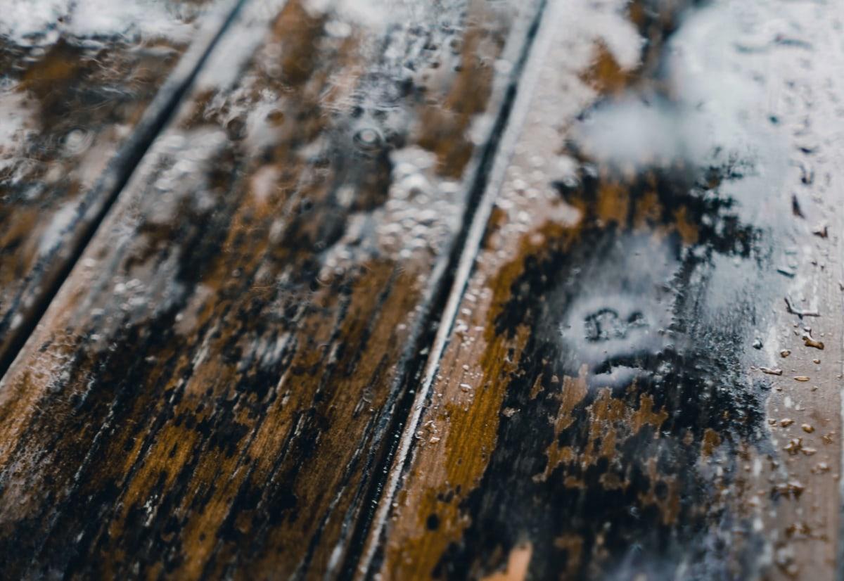 плесень в деревянном доме