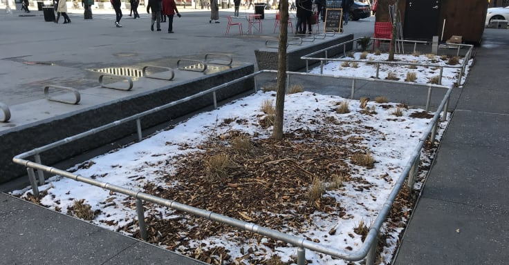 Tree beds springled with snow are covered with recently spread mulch