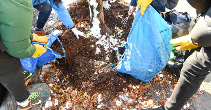 A group of volunteers pour mulch from blue bags around the base of a tree