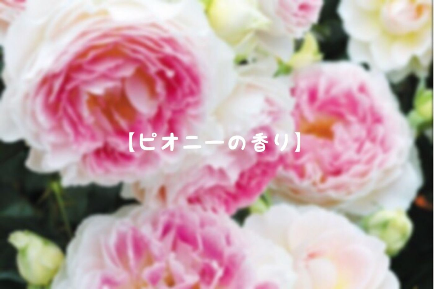 【ピオニーの香り】