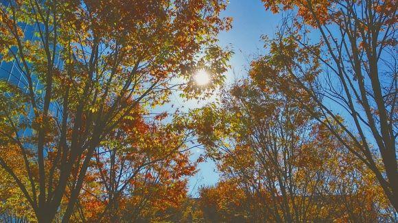 秋に向けての暖色系カラー。