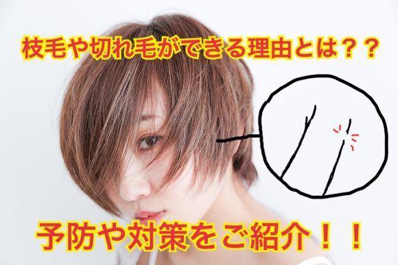 枝毛や切れ毛は何故できるの?