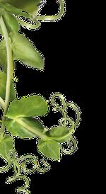kuva-vasen-kasvi