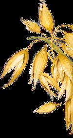 kuva-oikea-kasvi