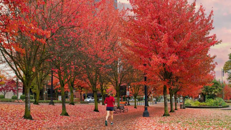 Jogging past autumn leaves