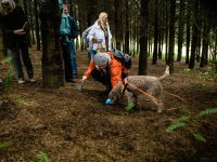 Guided Truffle Forage and Winemaker Lunch