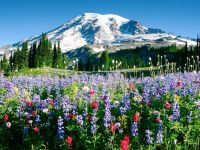 Day Tour of Mt. Rainer National Park