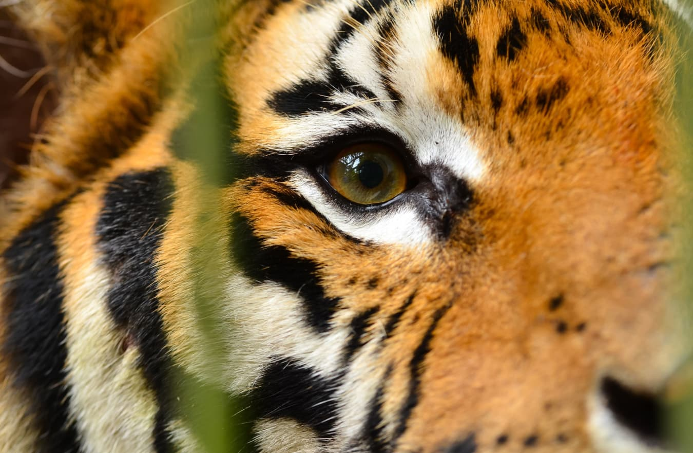 India: City Sights, Temples & Tigers