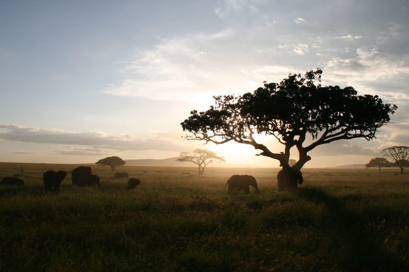 Beyond the Big Five: Uganda, Tanzania & the Spice Island
