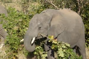 A picture of a baby elephant from Mousumi's s
