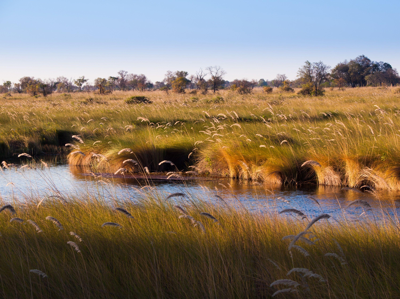 okovango delta landscape