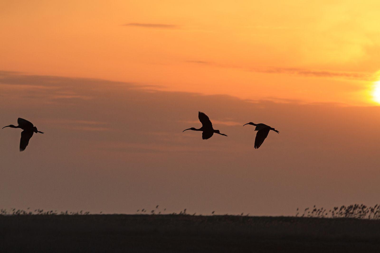 Lake Elementeita Sunset with Birds in Kenya