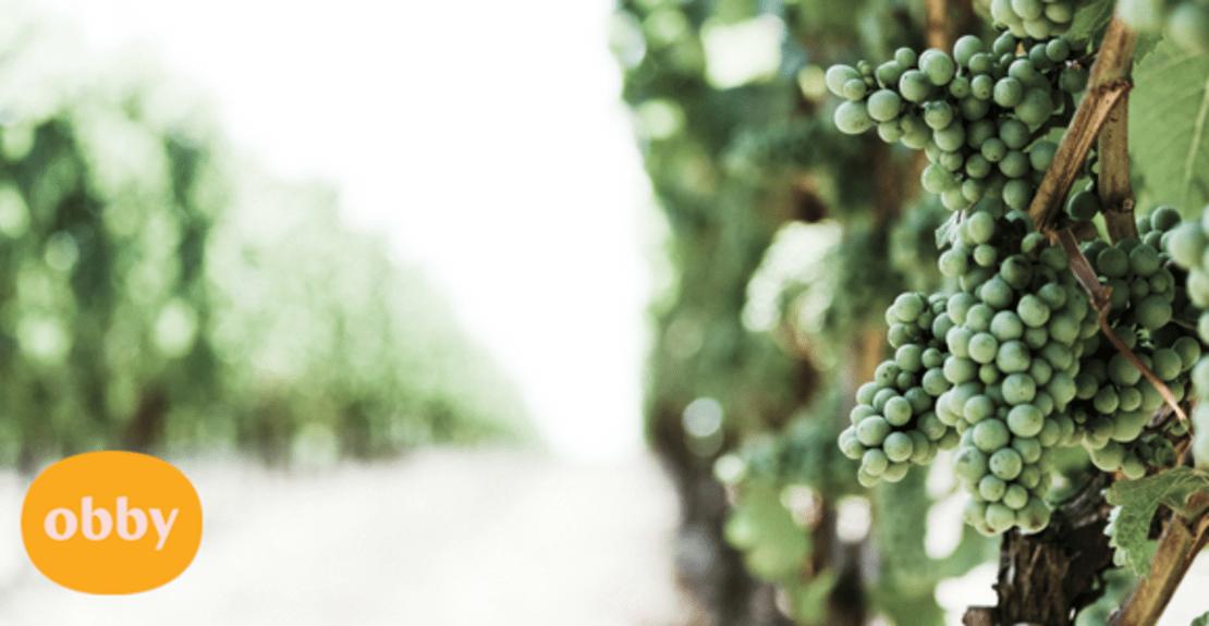 wine-tasting-guide-french-wine-regions