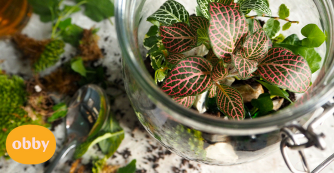 terrarium-guide-make-your-own-terrarium