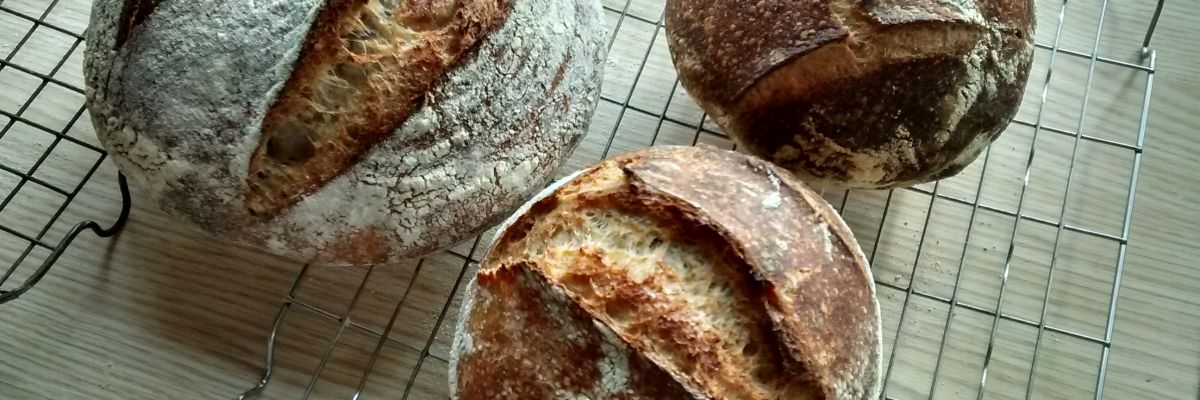 Badgerbrook Bread Breads- Obby