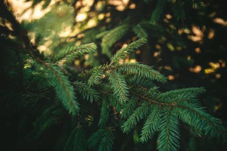 Learn how to get the most out of your Christmas Tree