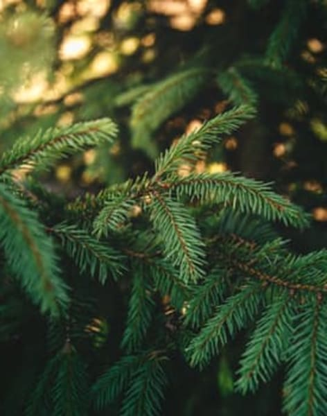 How to Eat Your Christmas Tree by The Bread Companion - food in London