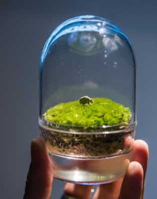 Handcraft a personal MOSS garden at Tom Dixon Factory by Botanical Boys - crafts in London