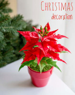Christmas Decoration using Polymer Clay by Polymer flowers by Tatiana Godunova - art in London