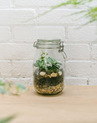 Build Your Own Jar Terrarium by Jar and Fern - crafts in London
