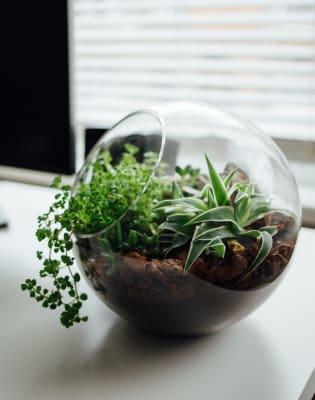 Succulent Cactus Terrarium Workshop Obby