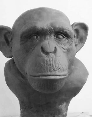 Sculpting Primates by Stephen McClure - art in London