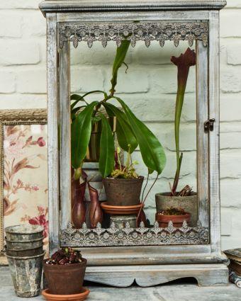 Private Class: Make a Terrarium with Carnivorous Plants