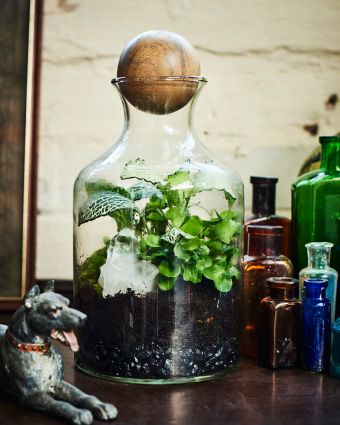 Private Class: Tropical Terrarium with Tool Making
