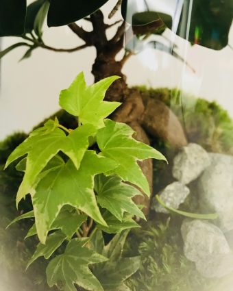 Large Eco-System Terrarium & Prosecco - Botanicalboys