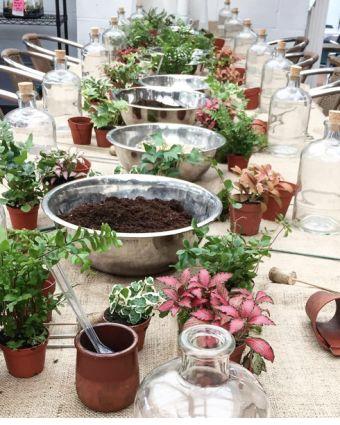 Make Your Own Open Terrarium Workshop
