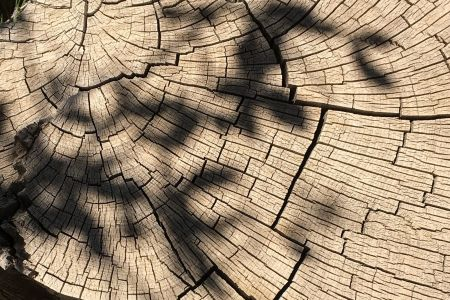 Get to grips with poetic light and shadow in the ' If You Don't Have Any Shadows You're Not in the Light' workshop at The Poetry School in London