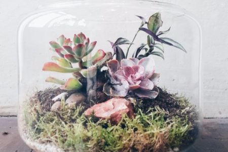 Terrarium Tuesday Workshop