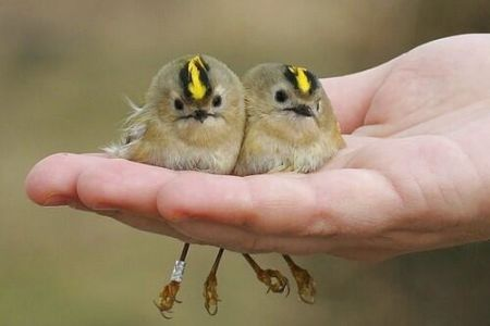 Explore well-known sayings and quotes in the ' Bird in the hand: Proverbial' poetry workshop at The poetry School in London.