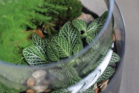 Build a Corked Jar Terrarium