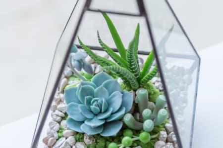 Clay terrarium