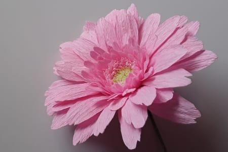 Paper Flower Making for Beginners