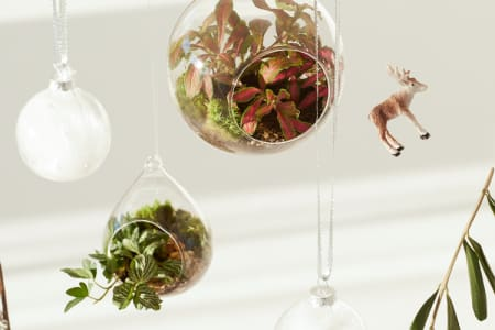 Leafage Demijohn & Christmas Bauble Terrarium Workshop