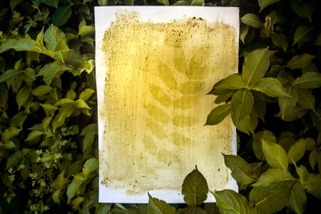 Beginnings of Photography: Anthotype-printmaking with plants juices