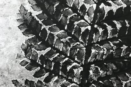 Monotype using Plants and Stencils