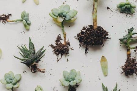 Plant Baby Masterclass (Plant Propagation)